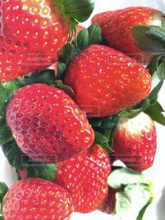赤,苺,フルーツ,果物,果実,複数,イチゴ