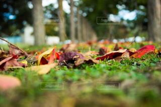 自然の写真・画像素材[254832]