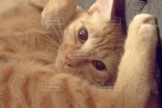 猫 - No.284357