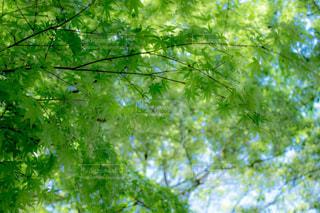 春の写真・画像素材[459584]