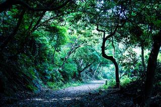 森の写真・画像素材[459586]