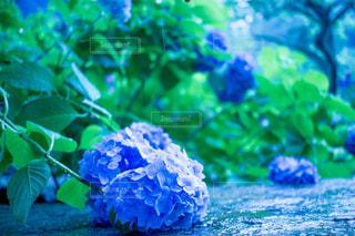 花の写真・画像素材[560170]