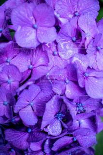 花の写真・画像素材[560175]