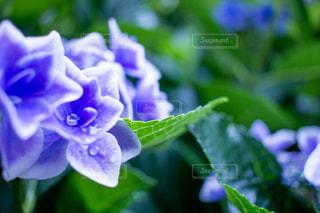 花の写真・画像素材[560188]