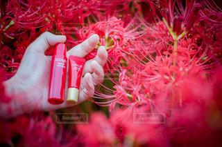 花を持っている手の写真・画像素材[762436]