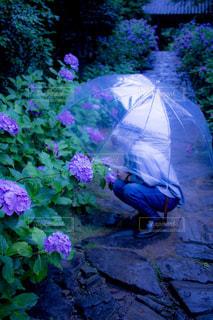 ピンクの傘と茂みのグループの写真・画像素材[821065]