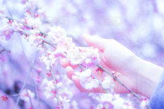 近くの花のアップの写真・画像素材[848610]