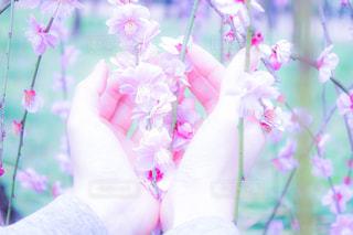 近くの花のアップの写真・画像素材[848611]