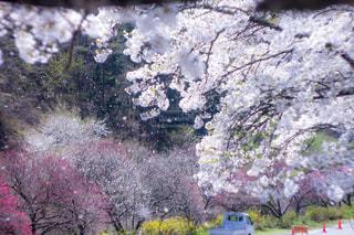 近くの花のアップの写真・画像素材[1124438]