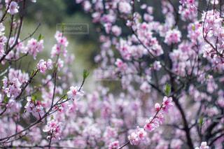 植物にピンクの花の写真・画像素材[1124450]