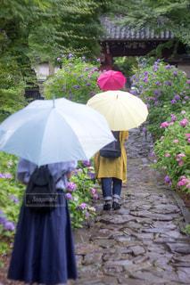 ピンクの傘を持った女性の写真・画像素材[1124486]