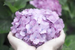 近くの花のアップの写真・画像素材[1124488]
