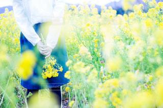 黄色の花の写真・画像素材[1131385]