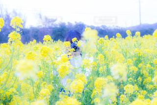 黄色の花の写真・画像素材[1131391]