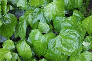 近くのグリーン サラダの写真・画像素材[1171216]