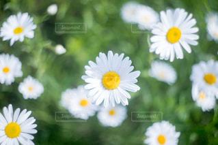 近くに黄色い花のアップの写真・画像素材[1197225]