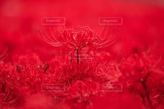 近くの花のアップの写真・画像素材[1197483]