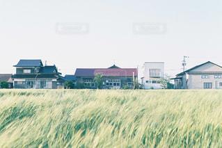 背の高い草のフィールドの写真・画像素材[1217466]