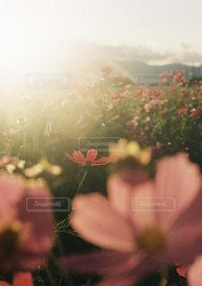 植物の花の花瓶の写真・画像素材[1233569]