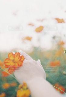 花がぼやけてをクローズ アップの写真・画像素材[1233570]