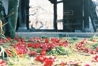 庭にピザの写真・画像素材[1233573]
