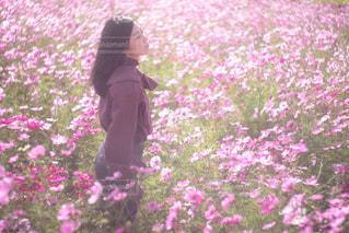 ピンクの花は草の中に立っています。の写真・画像素材[1585682]