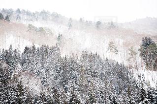 自然,空,木,雪,森,雪景色,外,白川郷,ホワイト