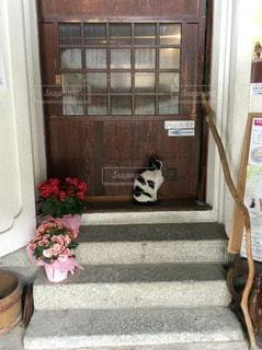 猫の写真・画像素材[69181]