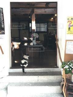 猫の写真・画像素材[74428]