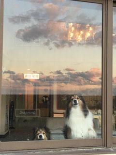 犬の写真・画像素材[311103]