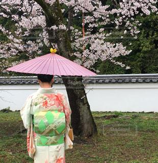 桜 - No.419996