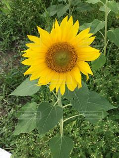 花の写真・画像素材[594851]