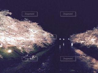 桜,花見,夜桜,満開,川沿い桜