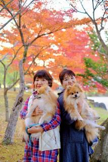 犬,ポメラニアン,紅葉,仲良し,ふわふわ,いぬ,わんこ,癒し,ふわもこ,多頭飼い