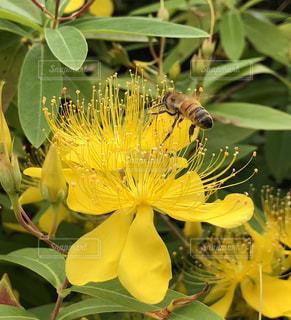 花,黄色,蜂,イエロー,お散歩,色,黄,ハチ,yellow,はち