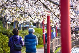 公園,桜,後ろ姿,人物,背中,人,後姿,休日,ゆっくり,ゆったり