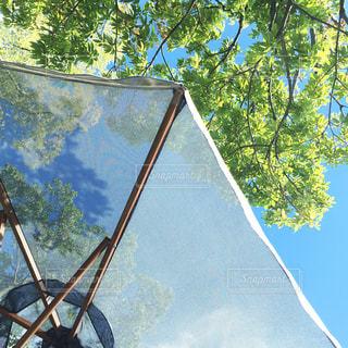 空,木,傘,屋外,緑,晴れ,水,樹木,パラソル,雫,雨の日,いい天気,かさ