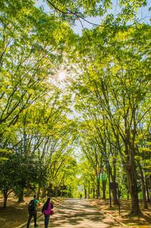 公園の木の写真・画像素材[2276050]