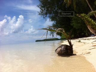 海,ビーチ,青空,砂浜,パラオ,ヤシの実