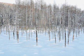 凍りついた青い池の写真・画像素材[1759219]