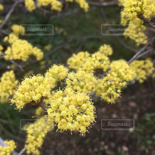 近くにあった黄色い花のドアップの写真・画像素材[1859974]