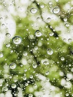屋外,緑,水,窓,水滴,ガラス,水玉,雫,しずく,雨粒