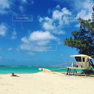 犬,海,空,ビーチ,旅行,ハワイ,海外旅行