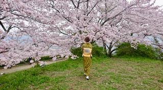 春,桜,後ろ姿,花見,着物,私
