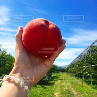 食べ物,ピンク,青空,フルーツ,果物,もも,果実,山形,食材