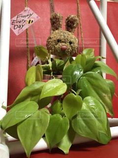 テーブルの上の花の花瓶の写真・画像素材[2111754]