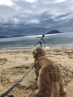 犬,自然,海,動物,かわいい,暑い,ダックス