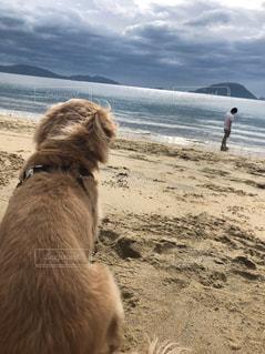 浜辺に座っている犬の写真・画像素材[2136763]