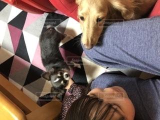 犬を抱いている女性の写真・画像素材[2708180]