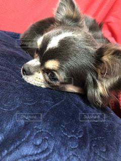 犬を閉じるの写真・画像素材[2710783]